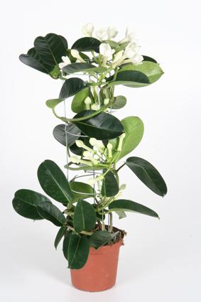 комнатные цветы каталог с фото: